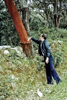 Paolo with Cork Trees
