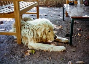 dog_badia-CC